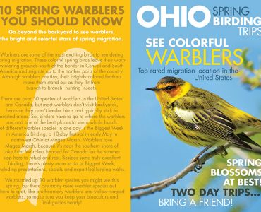Ohio Warblers - Magazine Cover